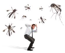 Mosquitoes attack - stock photo