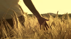Young man running throughout a sunny wheat field outdoor Stock Footage