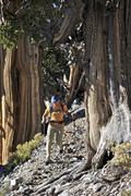 Young woman hiking, Mount Charleston Wilderness trail, Nevada, USA Stock Photos