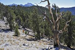 Couple hiking, Mount Charleston Wilderness trail, Nevada, USA Kuvituskuvat