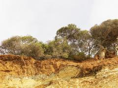 Eroded cliff and trees, Point Addis National Park, Anglesea, Australia Stock Photos