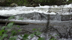 View of river flowing downstream through branches. - stock footage