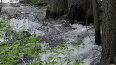 River flowing at the base of tree trunks. - stock footage