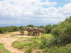 Elephant herd at waterhole, Addo Elephant Park, South Africa - stock photo