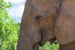 Closeup of an elephant, Addo Elephant Park, South Africa Stock Photos