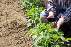Cropped view of young man crouched in vegetable garden holding smartphone - stock photo