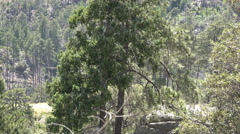 4K UHD blackhawk takes off from behind trees on mountain w sound Stock Footage