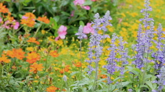 Landscaped flower garden with lots of colorful blooms, HD vdo. Stock Footage