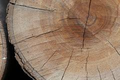 Texture of wood logs background with crack damage of aged annual rings Stock Photos