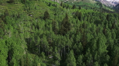 Aerial panning view of aspen and pine trees in a green forest. Stock Footage