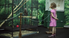 A girl looks at a monkey in a cage at the zoo Stock Footage