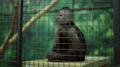 Funny monkey at the zoo Stock Footage