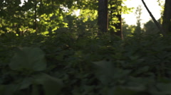 wild grass in sunset light fast moving sideways with gimbal motion blur - stock footage