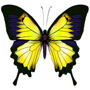 Butterfly. Yellow isolated illustration on white background - stock illustration