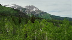 Aerial view flying over tree tops in forest towards mountain. Stock Footage