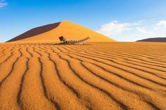 Skeleton in the desert of Sossusvlei, Dune 45, Namibia Stock Photos