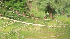 Flock of different birds Stock Footage