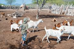 Goat herding in Himbakral (temporarily used) Stock Photos