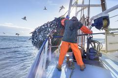 Fisherman emptying net full of fish into hold on trawler - stock photo