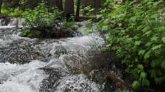 Panning view of river flowing past green plants in the mountains. Stock Footage