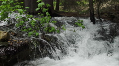 View of small creek flowing through green leaves Stock Footage