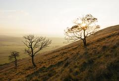 Bare trees on hillside, Mam Tor, Peak District, Derbyshire, England, UK Stock Photos
