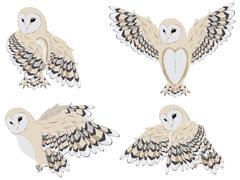Cartoon Barn Owl Stock Illustration