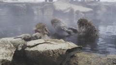 Snow Monkeys enjoy a hot bath on a cold winter day Stock Footage
