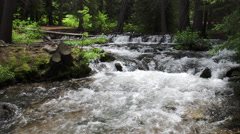 Panning view of river flowing in green forest. Stock Footage