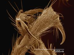 Coloured SEM of feet of army ant Stock Photos