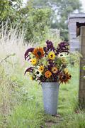 Flower bouquet in bucket at garden allotment Stock Photos