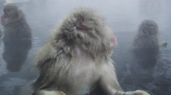 Snow Monkeys enjoy a hot bath on a cold winter day - stock footage