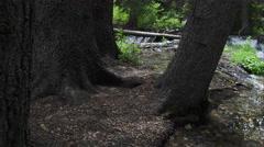 View walking through trees near small creek. Stock Footage