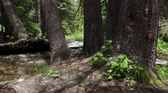 Walking view through trees and small river. Stock Footage