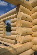 Unfinished Scandinavian Eastern white pine log cabin erected on builder's lot to - stock photo