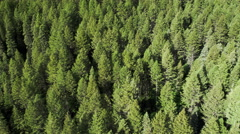 Aerial panning view of pine tree forest. Stock Footage