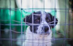 Portrait of alert dog behind wire fence Stock Photos
