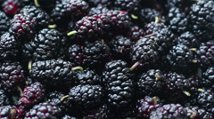 Rotation Mulberry Background - stock footage