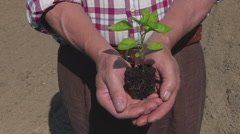Old farmer holding a small plant of pepper in his hands Stock Footage