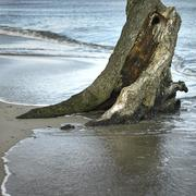 Tree surrounded by seawater on beach at high tide Stock Photos