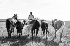 B&W rear view image of woman riding and leading six horses in field - stock photo