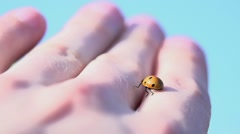Ladybird. insects. fauna and flora. slow motion Stock Footage