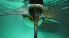 Penguin. penguin swimming. sea life. ocean animals background Stock Footage