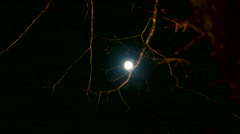 Creepy Moon Behind Tree Branches Timelapse - stock footage