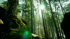 sun beams trough trees in forest. beaming light. nature. fantasy - stock footage