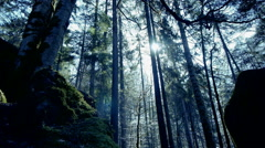 Sun rays. sunbeam. trees forest woods background. beaming light. nature. fantasy Stock Footage