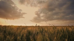 Time lapse cornfield agriculture Stock Footage