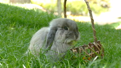 Rabbit Eating food in park Stock Footage