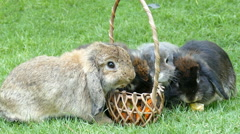 Rabbit Eating Corn and Carrot in park Stock Footage