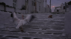 Pelican goes up the stone stairs in the Sunset - Mykonos, Greece Stock Footage